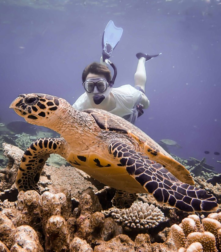Paul and Turtle, Maldives